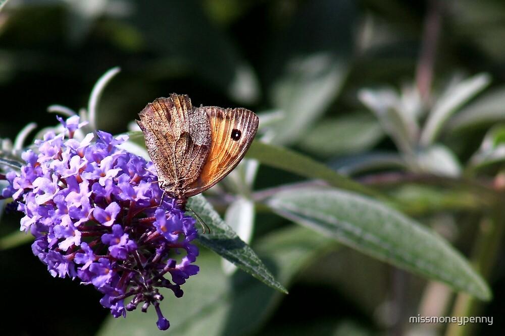 Brown on the bud by missmoneypenny