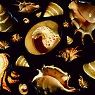 """'Pearly Shells"""" by debsphotos"""