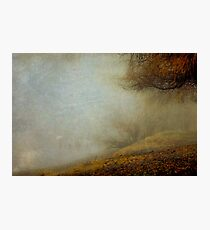 Trees of the Fraser Photographic Print