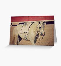Camargue horse Greeting Card