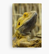 Australian Inland Bearded Dragon Reptile Canvas Print