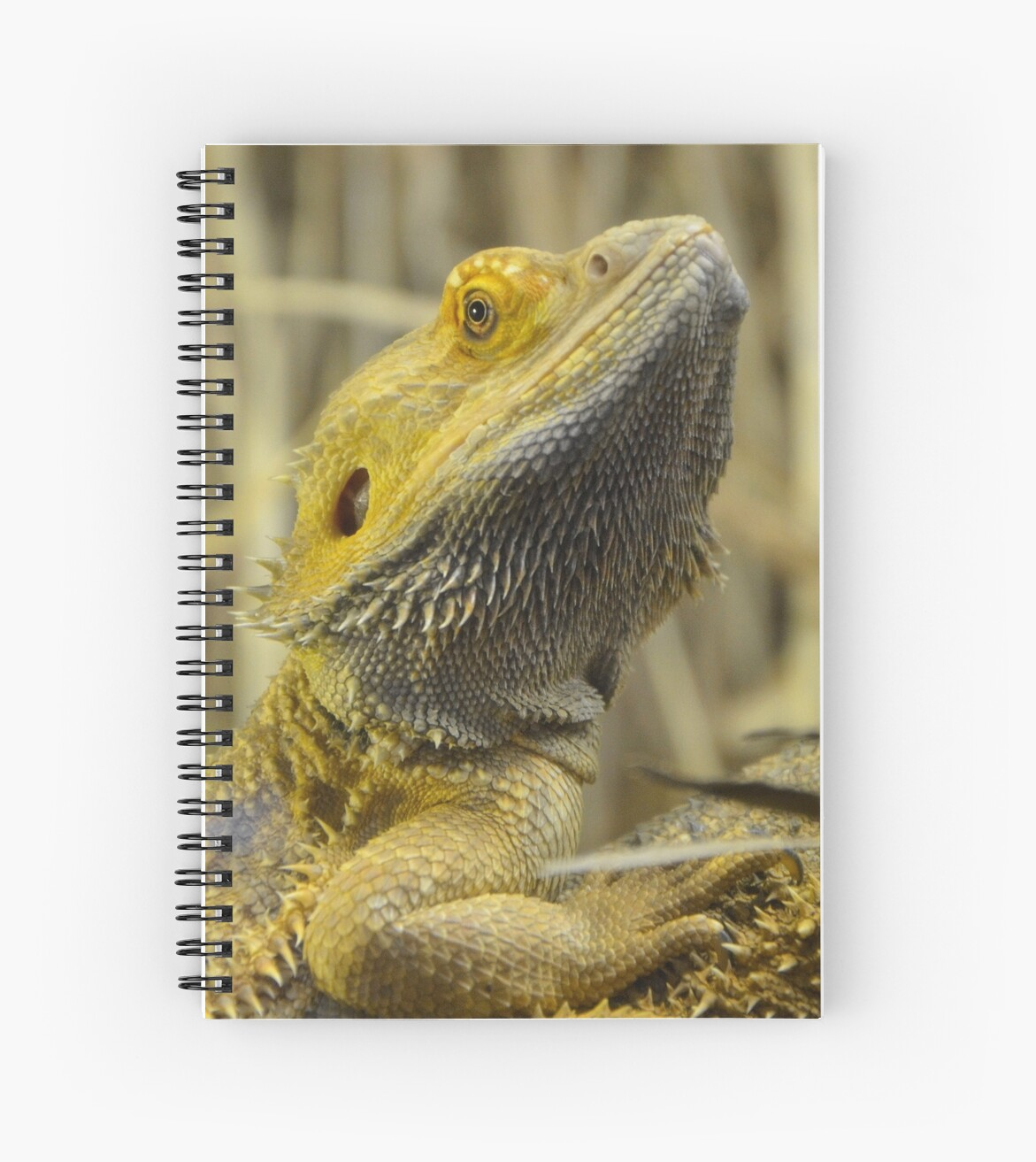 the characteristics of the inland bearded dragon