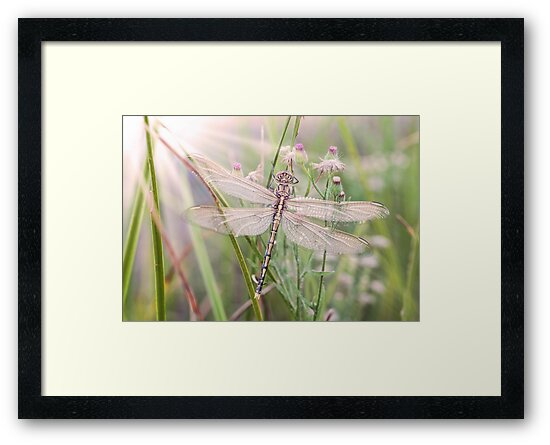 Newly emerged dragonfly #1 by clearviewstock