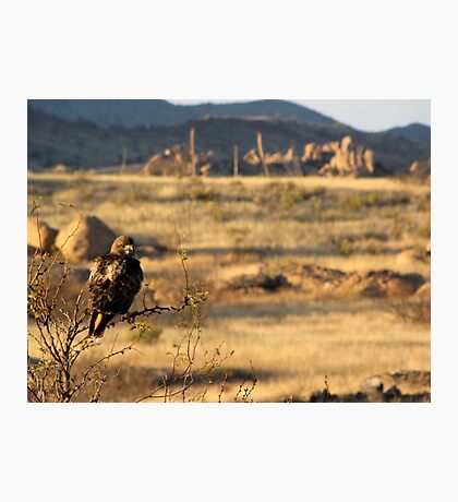 Red-tailed Hawk ~ Texas Canyon, AZ viewing Photographic Print