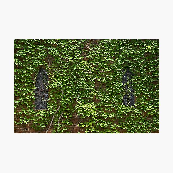 Lost Windows 2 - Gostwyck Chapel - Spring Photographic Print