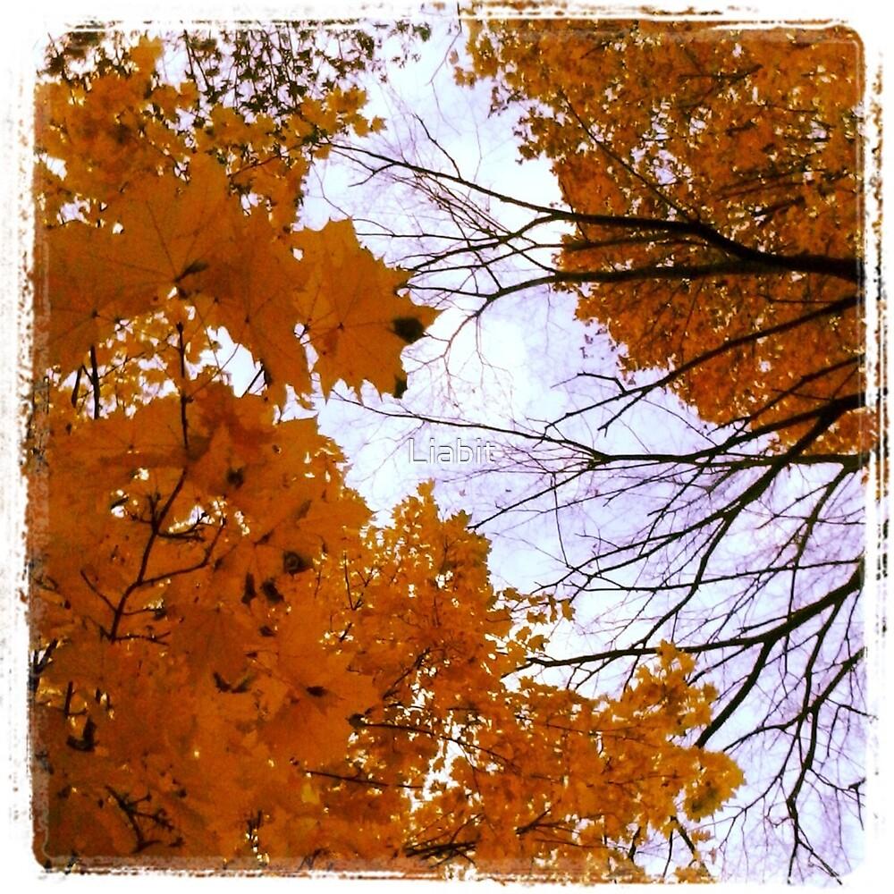 Fall by Liabit