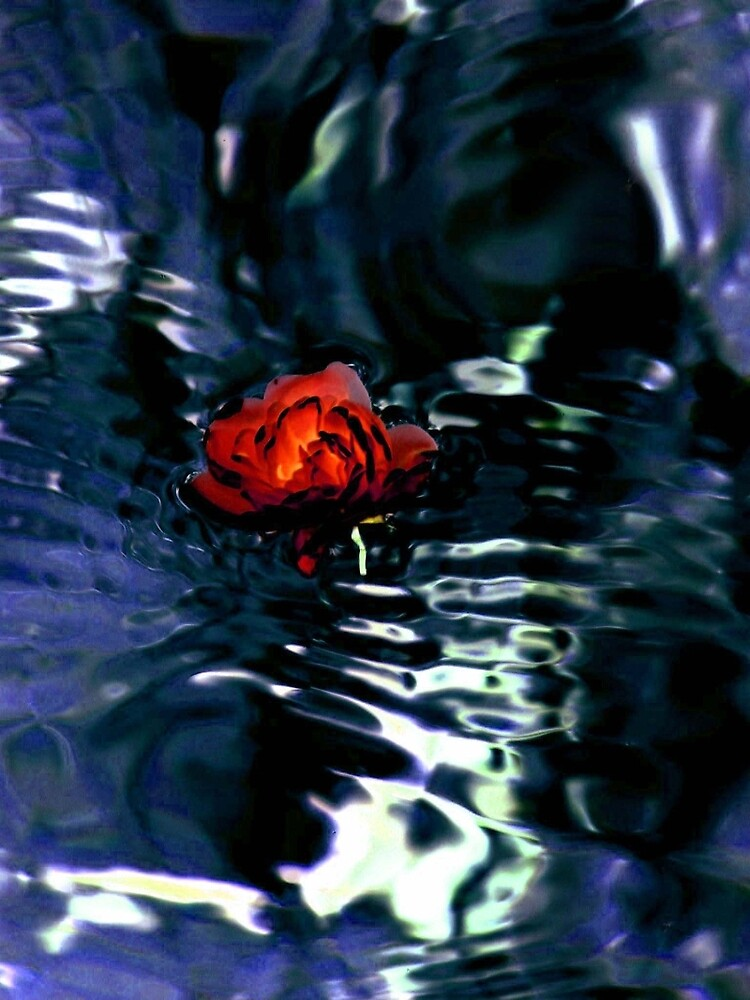 Red Rose In Dark Water by Dale Cherney