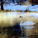 Winter Wonderland by Brian Bo Mei