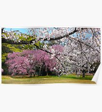 wonderful sakuras Poster
