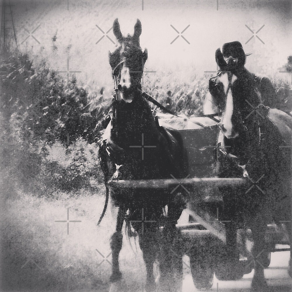 Amish Horse Team by angelandspot