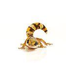 Northern Velvet Gecko (Oedura castelnaui) by Shannon Wild