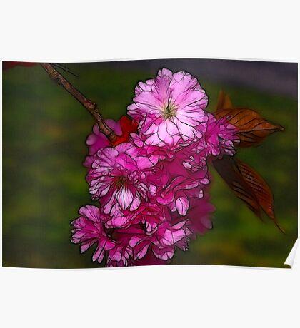 Cherry Blossom  (Spring) Poster