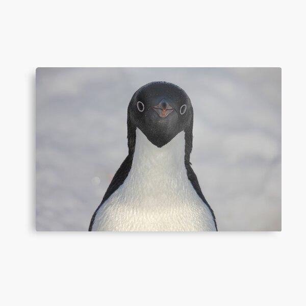 Penguin portrait Metal Print