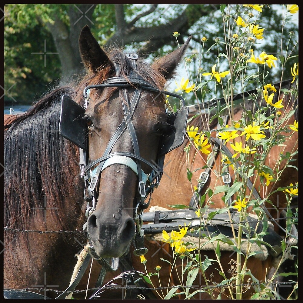 Horse and Wildflowers by angelandspot