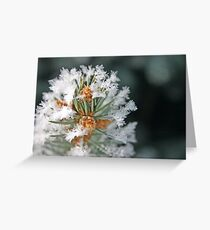 Pine Decorations Greeting Card