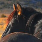 A Wild Horse Called Wisdom by Jeanne  Nations