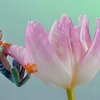 Pastel colours by Angi Wallace