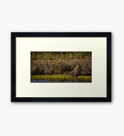 Gordon River Tasmania Framed Art Print