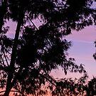 Arizona Sunset by mintdawn