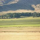 Alfalfa Field in Montana by May Lattanzio