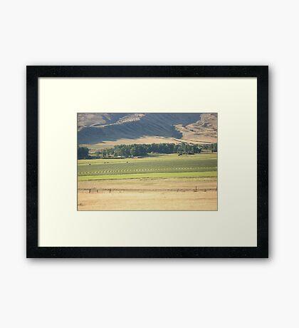 Alfalfa Field in Montana Framed Print