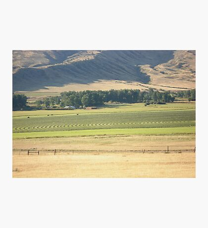 Alfalfa Field in Montana Photographic Print