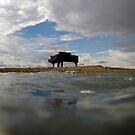 Sandbar Piano - Biscayne Bay Miami by James and Karla Murray