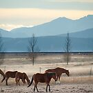 Wild Mountain Horses by Gregory Ballos