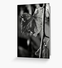 Delicate threads of life Greeting Card