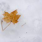 leaf by imagegrabber