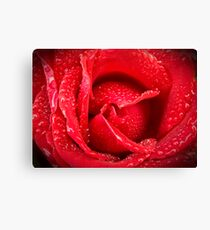 Rose After Rain Canvas Print