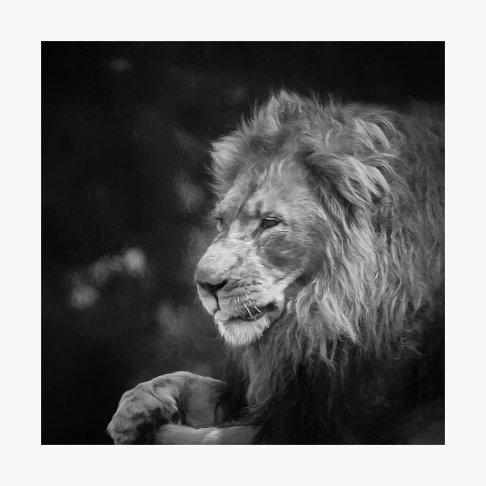 King Of The Jungle (black & white digital painting) Photographic Print