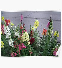 Frankenmuth Fowers Poster