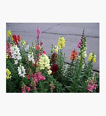 Frankenmuth Fowers Photographic Print