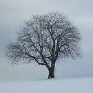 february by Birgit Schnapp