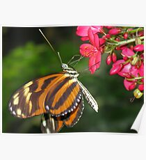 Monarch and Red Flower Poster