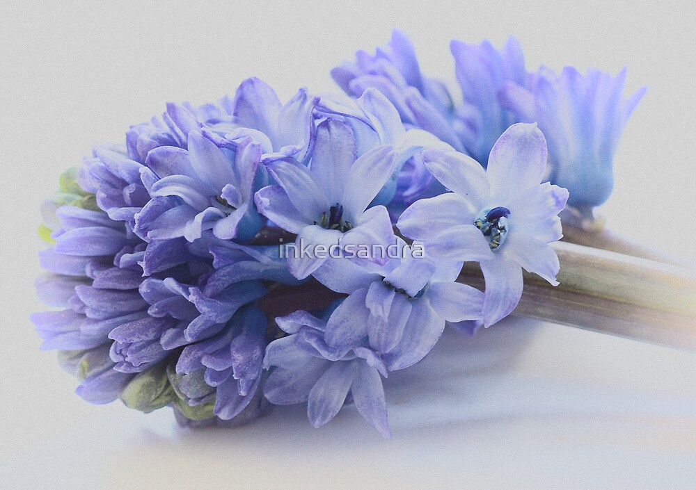 Hyacinth Bucket, pronounced bokeh! by inkedsandra