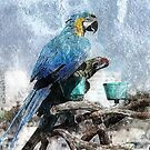 Parrots by saseoche