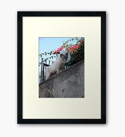 Defiant Accessory  Framed Print