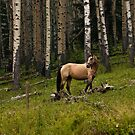 Horse in the Forest by ArianaMurphy