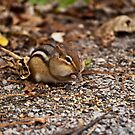 Chipmunk Cheeks by ArianaMurphy