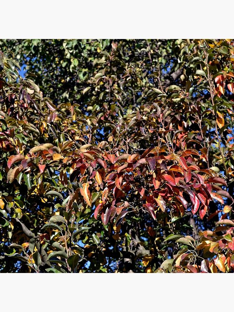 Autumn landscape, leaves. by starchim01