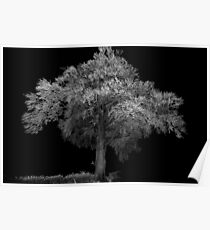 Tree at night canon speedlight and 5D Poster
