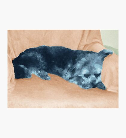 A Dog's Life,  in color Photographic Print