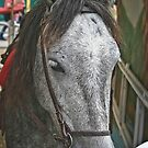 Children Ride Me at Fairs, But I Really Want to Run Free.... by Heather Friedman