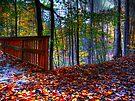 Autumn Ravine  by Marcia Rubin