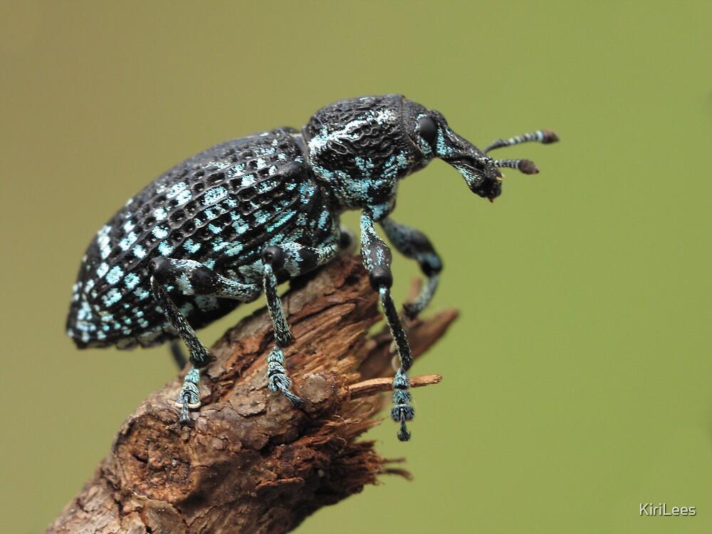 Botany Bay Weevil by KiriLees