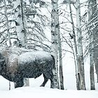Buffalo Winter by peaceofthenorth