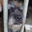Mumi, a small abandoned dog by KanaShow