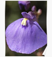 Flower details of Fairy Aprons, Utricularia dichotoma Poster